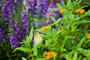Goldfinch Digital Art Prints - Alone in the Garden Print by Betty LaRue
