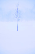 Snow Photo Prints - Alone in the Snow Print by Andrew Soundarajan