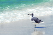 Florida Panhandle Photo Posters - Alone on the Beach Poster by Thomas R Fletcher