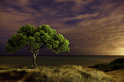 Alicante Posters - Alone Tree Poster by Alex Stoen Photography