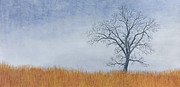 Winter Trees Painting Metal Prints - Alone Winter Metal Print by Garry McMichael