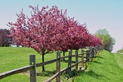 Split Rail Fence Photos - Along a road by Beth Hughes