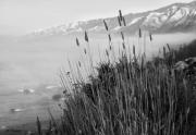 Cattails Photos - Along Highway 1 by Patricia Stalter