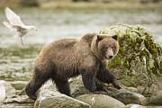 Tim Grams - Along the Chilkat River