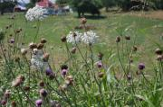 Queen Annes Lace Photos - Along The Country Road by Jan Amiss Photography