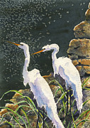 Egret Paintings - Along the Edge by Marsha Elliott