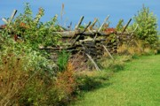 Fall Photos Prints - Along The Fence - Battlefield Orchards Print by Angie McKenzie