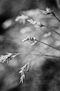 Wayside Photos - Along the path - black and white by Hideaki Sakurai