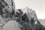 South Kaibab Trail Posters - Along the South Kaibab Trail Poster by Julie Niemela
