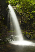 Tennessee Metal Prints - Alongside Grotto Falls Metal Print by Andrew Soundarajan