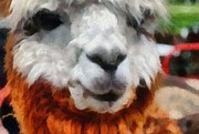 Fleece Posters - Alpaca Poster by Michelle Calkins