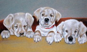 Puppies Pastels Framed Prints - Alpha Framed Print by Crystal  Harris-Donnelly