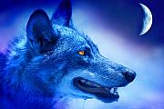 Wolves Metal Prints - Alpha Wolf Metal Print by Mal Bray