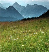 Austria Photo Posters - Alpine Meadow Poster by Terry Roberts Photography