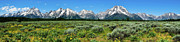 National Park Posters - Alpine Meadow Teton Panorama II Poster by Greg Norrell