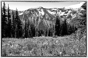 Snow Prints - Alpine Meadow VIII at Mount Rainier Print by David Patterson
