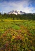 Meadow Originals - Alpine Meadows by Mike  Dawson