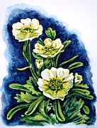 Ranunculus Paintings - Alpine ranunculus by Zaira Dzhaubaeva