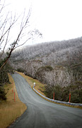 Railing Prints - Alpine Way Road Near Thredbo Australia Print by Virginia Star