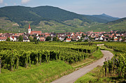 Alsace, France. Print by Buena Vista Images