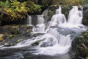 Waterfalls Rivers And Lakes - Alsea Falls by Greg Vaughn - Printscapes