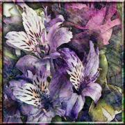 Purple Flowers Digital Art - Alstroemeria by Barbara Berney