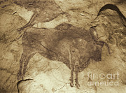 Cave Prints - Altamira Cave Paintings Print by Photo Researchers