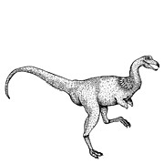 Black Pen Work Prints - Alvarezsaurus - Dinosaur Print by Karl Addison