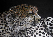 Cheetah Pastels - Always Alert by John Hebb