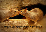 Cindy Wright Posters - Always Kiss Me Goodnight Poster by Cindy Wright