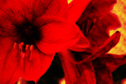 Gaudy Posters - Amaryllis Abstrakt Poster by Angela Doelling AD DESIGN Photo and PhotoArt