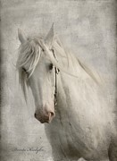 Gray Horse Digital Art Framed Prints - Amazing Grace Framed Print by Dorota Kudyba