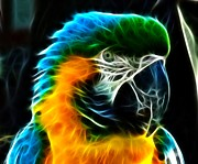 Parrot Posters - Amazing Parrot Portrait Poster by Pamela Johnson