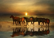 Horse Herd Photo Prints - Amber Herd Print by Stephanie Laird