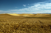 Wheatfields Photo Prints - Amber Waves of Golden Grain Print by Reflective Moments  Photography and Digital Art Images