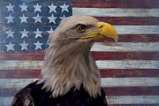 American Bald Eagle Photos - American bald eagle and American flag by Garry Gay