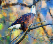 Eagle Paintings - American Bald Eagle  by Clarence Alford