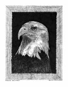 Note Cards Drawings Acrylic Prints - American Bald Eagle Acrylic Print by Jack Pumphrey