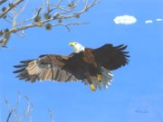 Multi Colored Paintings - American Bald Eagle by William Demboski