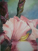 Gladiola Paintings - American Beauty by Brad Hook
