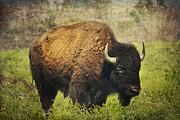 Bison Art - American Bison by Iris Greenwell