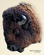 Bison Digital Art - American Bison by Scott  Washburn
