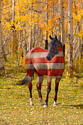 Red White And Blue Prints Prints - American Bred Print by James Bo Insogna