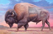 Wildlife Landscape Painting Prints - American Buffalo Print by Hans Droog