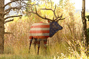 Colorado Flag Posters - American Bull Elk   Poster by James Bo Insogna