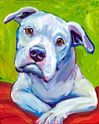 White Dog Framed Prints - American Bulldog on Elbows Framed Print by Dottie Dracos