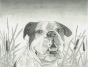 Best Friend Drawings - American Bulldog with Backround by Matthew Moore