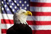 American Flag Photo Prints - American Eagle Print by David Lee Thompson