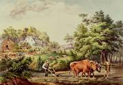 Oxen Posters - American Farm Scenes Poster by Currier and Ives