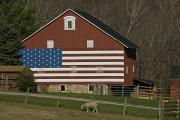 Sheep Farm Prints - American Flag Painted On The Side Print by Todd Gipstein